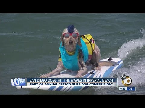 San Diego dogs hit the waves in Imperial Beach