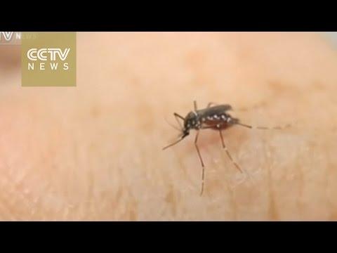 Obama seeks 1.8 billion USD to fight Zika