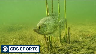 Bobber Fishing Tips for Crappie in Shallow Water