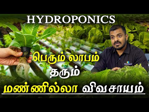 Agriculture And Organic Farming - Hydroponic All You Need To Know Profitable Hydroponics In Tamil