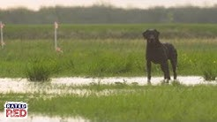 Tips On Training Your Dog to Duck Hunt