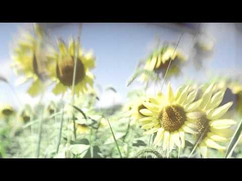 Solar Bears - Wild Flowers