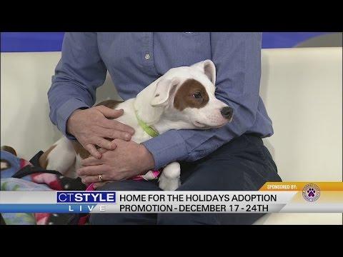 Home For The Holidays: Pet Adoption Event