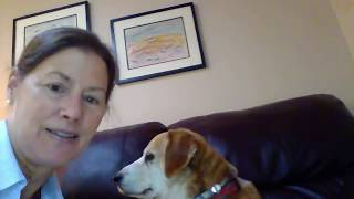 Buddy the canine correspondent and rescue boat dog: interview with author