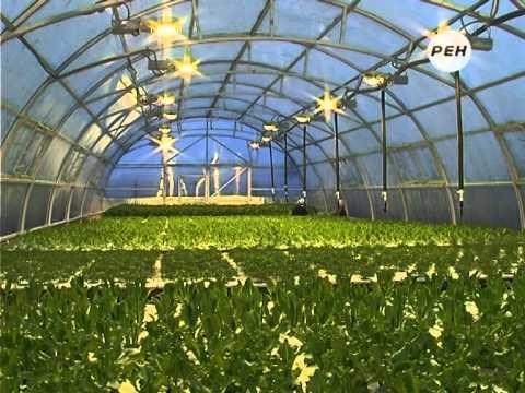 Выращивание салата гидропонным методом в Марий Эл