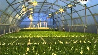 Выращивание салата гидропонным методом в Марий Эл(Свежий салат среди зимы или наш ответ санкциям! Сменить комфортный быт в Йошкар-Оле и Москве на сельскую..., 2014-11-24T16:44:19.000Z)