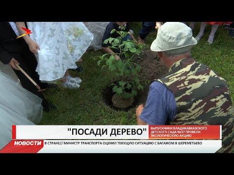 Выпускники Владикавказкого детского сада №37 посадили дерево