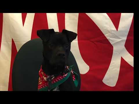 Mix 106 Billy and Charene's Twelve Days of Strays Day 1: Gomez