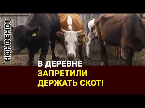 Нонсенс! В деревне запретили держать скот!