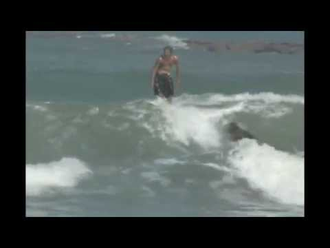 Get Paid to Surf: Surfer Girl Surfing at South Padre Island Texas