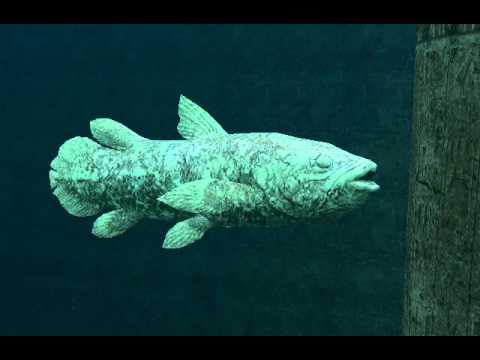 Endless Ocean 2: Legendary Creature Walkthrough