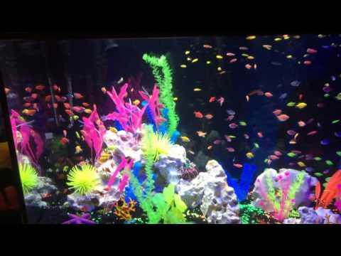 265 Gallon Glo-Fish Display Tank!