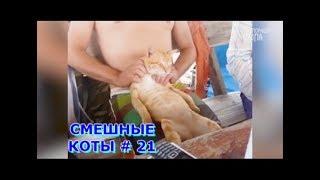 Приколы с кошками и котами #21. Подборка смешных и интересных видео с котиками и кошечками 2017