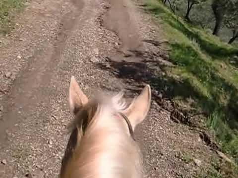Horse ride on Canela, Monda, Spain