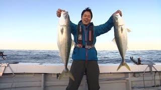 #213 ヒラメ・ヒラマサ・ブリ・高級魚乱舞!落し込み釣りで驚愕の釣果!