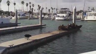 むしゃくしゃしてやった。相手は誰でもよかった。犬、まったりと日光浴をしていたアシカを蹴散らす