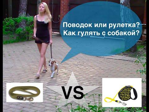 Выгул собак. Поводок рулетка для собак или ошейник для собак? Дрессировка собак.