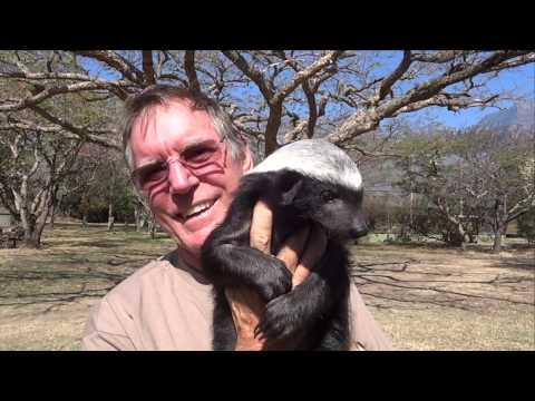 Moholoholo Rehab Centre South Africa | Meet A Baby Honey Badger