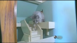 WEBCAST: Man Builds Cat Palace