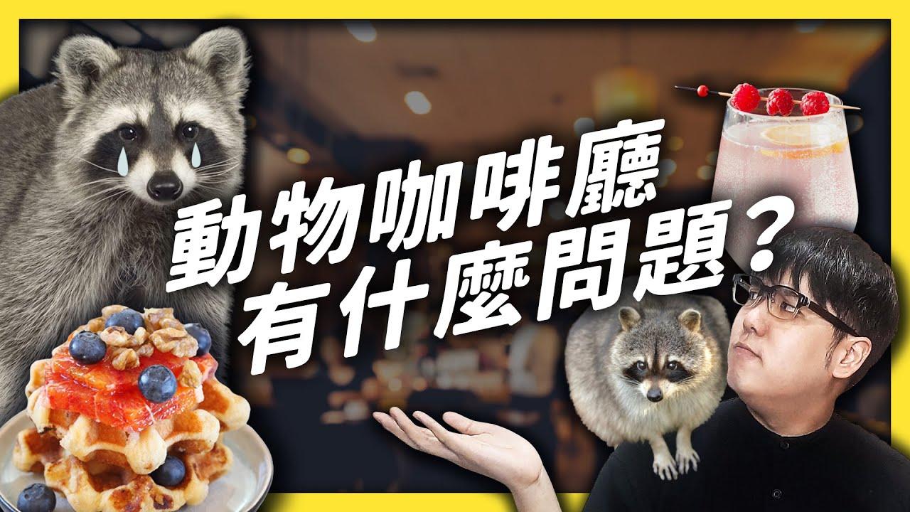 虐待浣熊的咖啡廳,有法可管嗎?你的「療癒」可能會讓牠很「焦慮」!|志祺七七