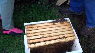 Splitting the hive. We need to get this done NOW  Swarming looms!