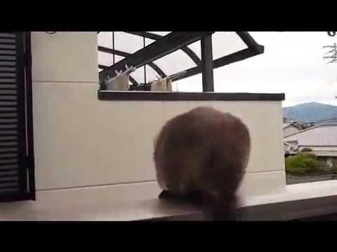 Смешное видео 5 секунд смеха!