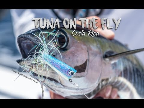 Fly Fishing For Tuna In Costa Rica