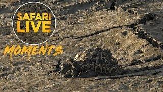 #MondayMotivation: Tortoise Stuck In Mud
