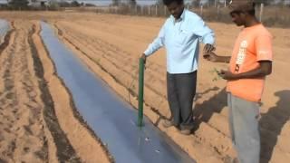 Viswanadha Raju,Easy Planter,tamata transplanter,seed link transplanter,easy method of planting,