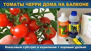 видео Как вырастить помидоры черри