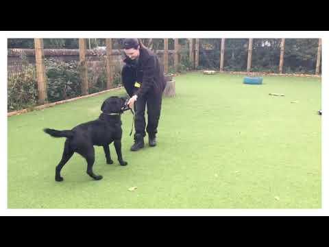 Gordon at Dogs Trust Glasgow