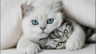 Смешные кошки (Выпуск 3) Приколы