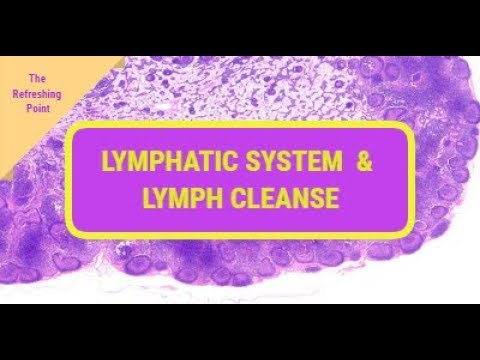 Lymphatic System the Bodies Most Important, Yet Forgotten System - Cleansing Your Lymph System