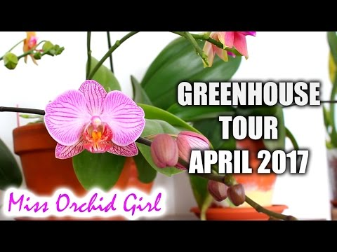 Orchid Greenhouse Tour - April 2017