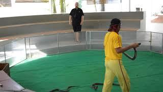 Шоу со змеями на обзорной экскурсии от Анекс тур, Нячанг, Вьетнам.