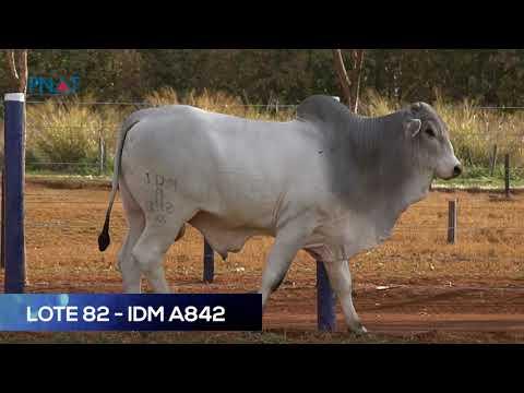 LOTE 82 - IDM842 - NELORE