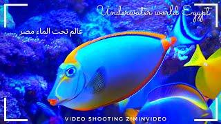 Underwater world TIA Heights Hotel Egypt Подводный мир Египет Fish मछल Ikan Cá 魚 ปลา ziminvideo