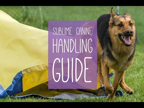 The Sublime Canine Handling Guide