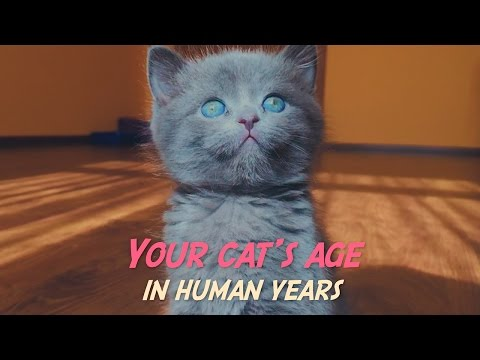 how-to-tell-your-cat's-age-in-human-years
