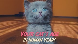 How to tell your cat's age in human years