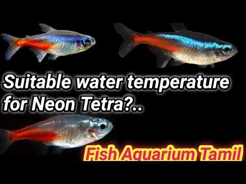 What Is The Suitable Temperature For Neon Tetra?..  / Fish Aquarium Tamil