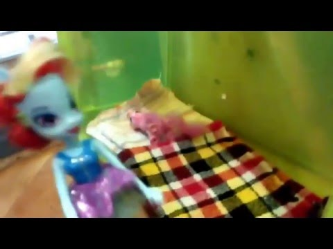 Видео для девочек:  Куклы Девушки из Эквестрии Май Литл Пони Мой маленький пони