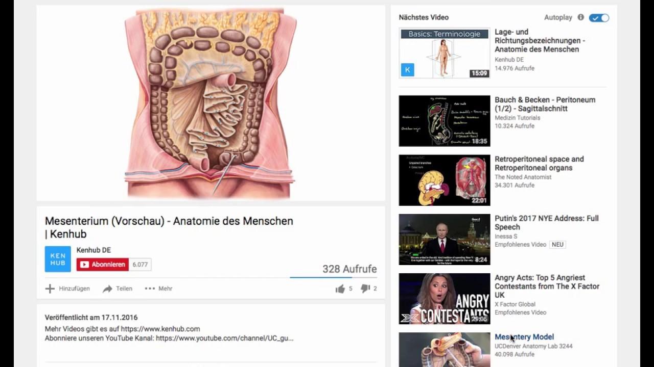 Gekröse - Mesenterium Im Internet - YouTube