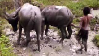 Dang turpukta hamoraon (Dakka Hutagalung), Tetty Manurung