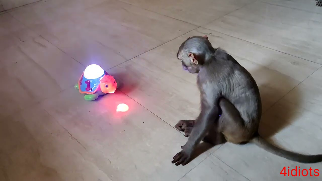 Download bajju na new toy aa gya hai dekho kese darta hai ye or simu ka kya kehna