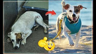 INSPIRING Animal Rescue Stories Homeless animals with a Broken Heart | before after