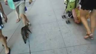 Cat walking in the streets of NYC