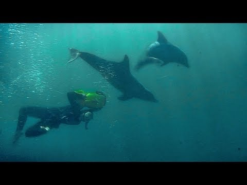 Swimming with Dolphins | Deadly 60 | Earth Unplugged