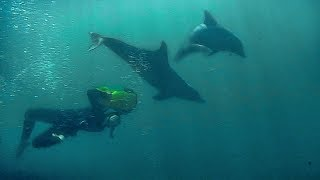 Swimming with Dolphins | Deadly 60 | Earth Unplugged thumbnail