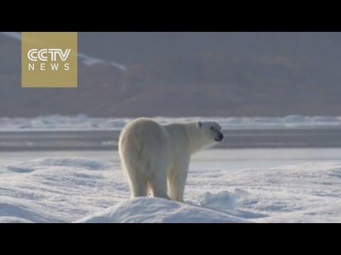 Arctic changes an
